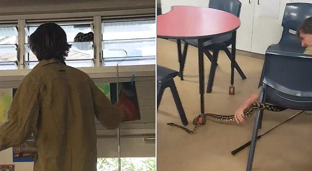 Queensland students treated to snake in science lesson